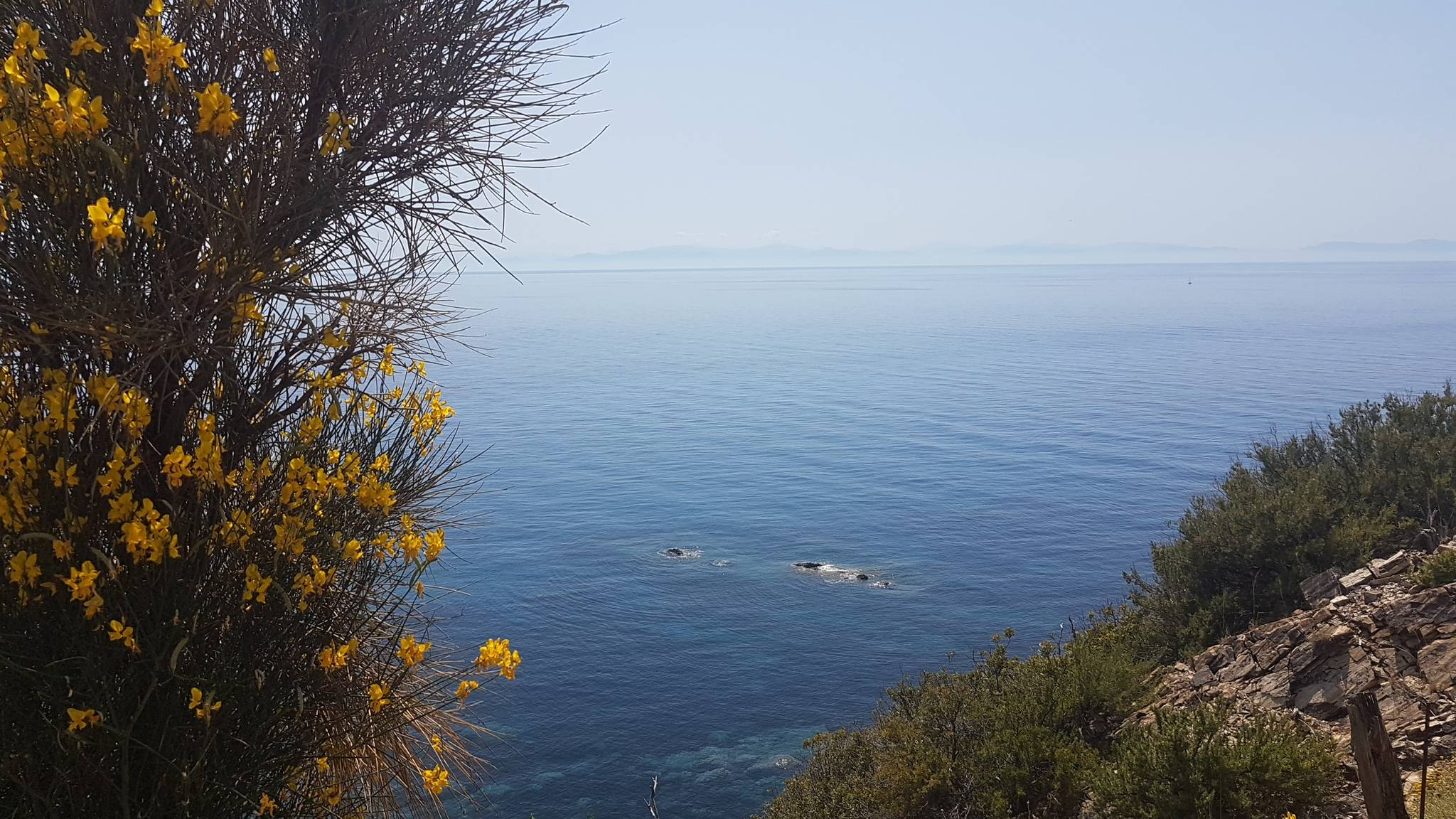 Isola d'Elba Ovest 21