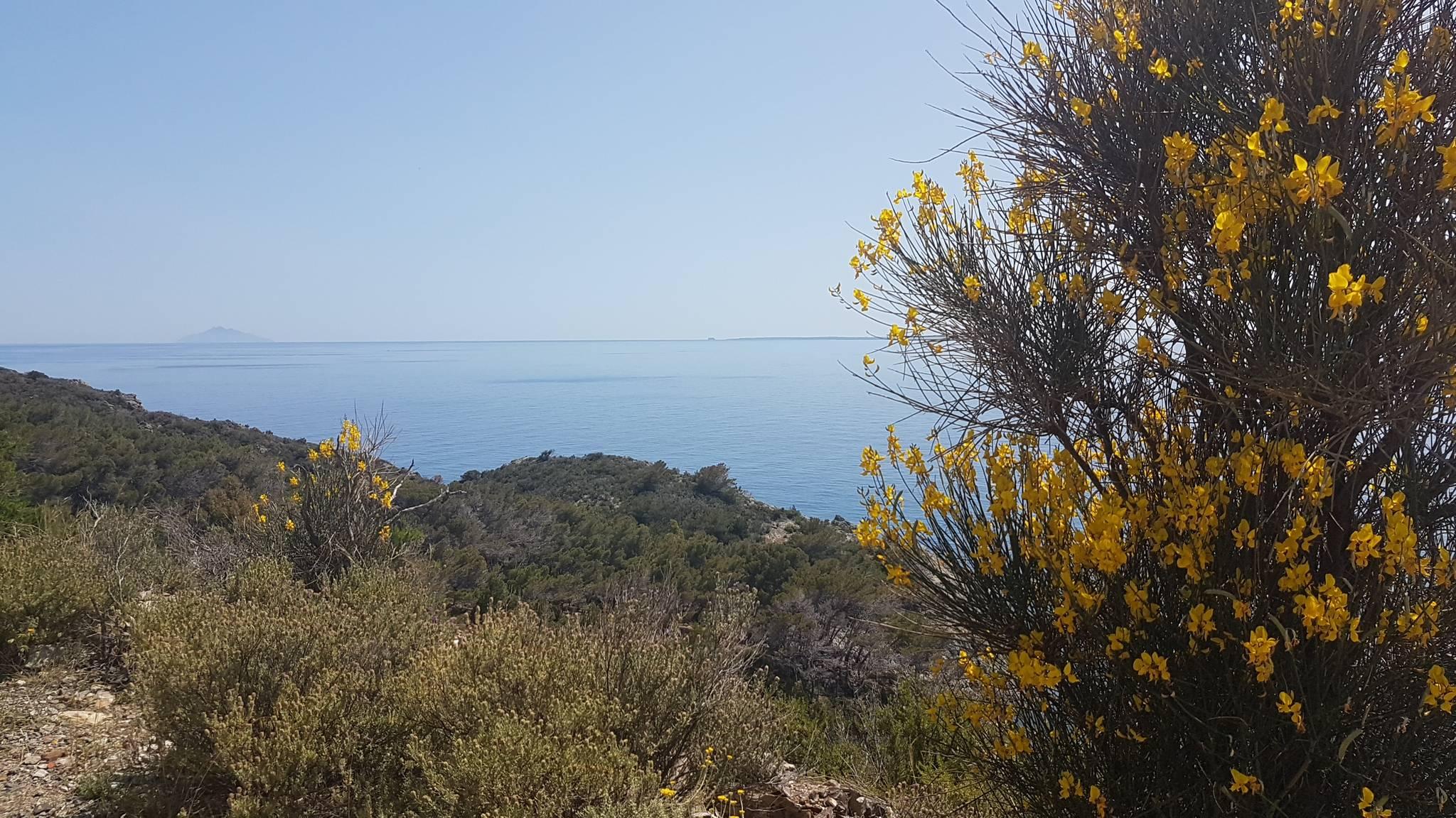 Isola d'Elba Ovest 24